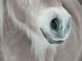 Pferde Detail 87, Nase Nüstern und Maul von vorne seitlich