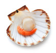 Raw scallop on white background