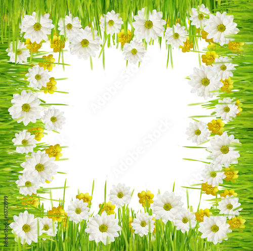 Grass and daisy flowers frame