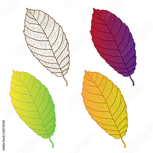 Collection colorful autumn leaves isolated.