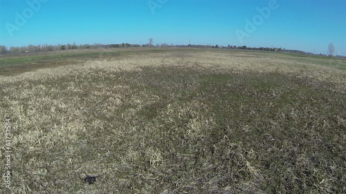 flying  Shadow from copter\drone  in  field. Aerial