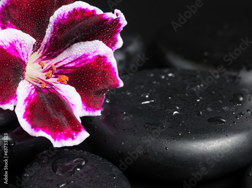 Spa concept with beautiful deep purple flower and zen stones wit