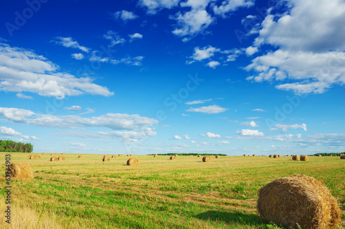 view on field with bales of straw in autumn