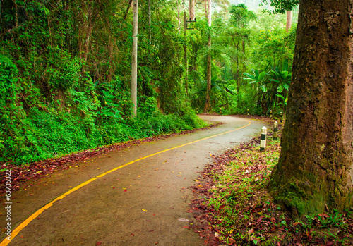 Road winding through the rain forest on Thailand national park