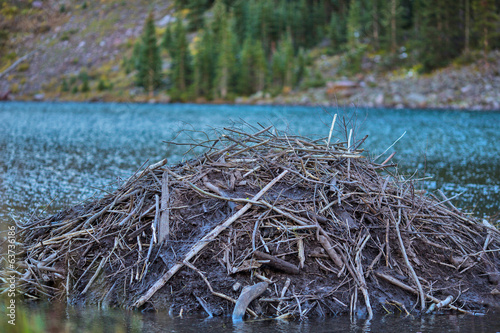 Beaver hut on the Colorado Mountain Lake