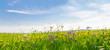 Leinwandbild Motiv Flower field in springtime