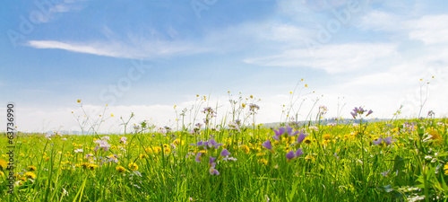 Poster Landschappen Flower field in springtime