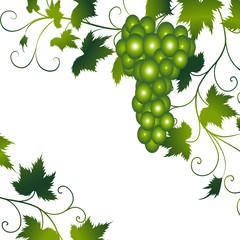 wein,weinblätter,weintraube,traube,grün,floral,menü,karte