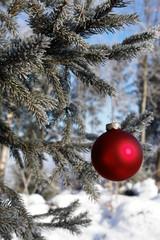 weihnachtskugel in ästen