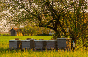 Apiary on the meadow