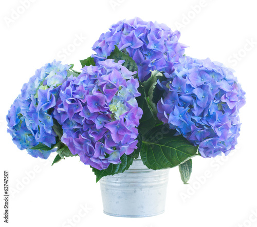 In de dag Lilac posy of blue hortensia flowers