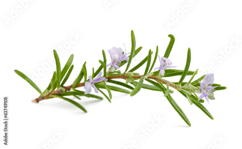 canvas print picture rosemary flowers