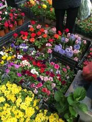 Bitki Türleri