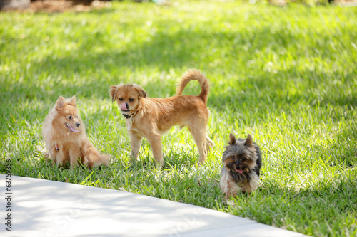 Stock image of puppies playing in the park