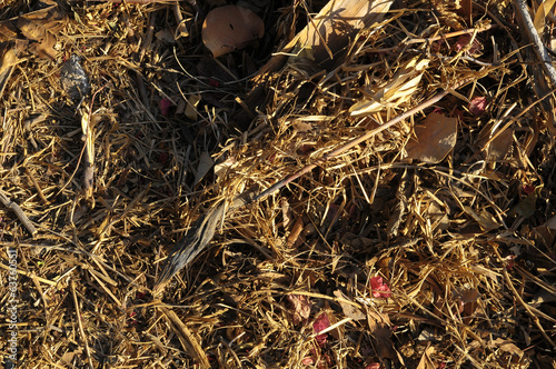 Brown Dry Grass Herb Texture