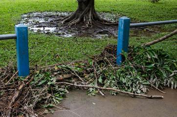 サイクロン通過後のケアンズ 2014-4-13 Cyclone Ita