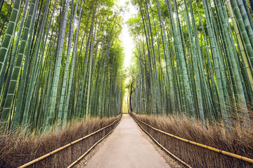 Bamboo Forest, Kyoto, Japan © SeanPavonePhoto