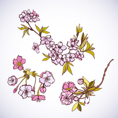 Blossoming sakura decorative elements