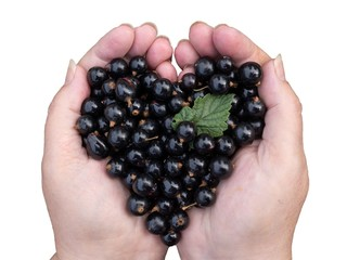 Black currant held by hands shaping a heart isolated on white