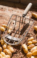 Fresh Potatoes on the market