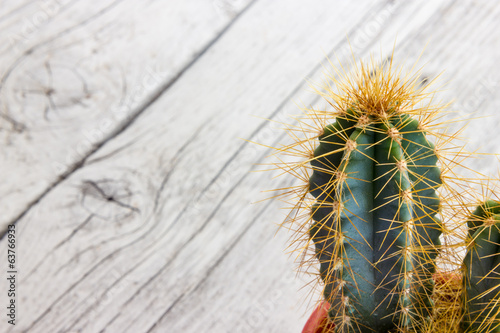 Cactus plant with thorns