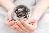 Kitten in human hands - 63767178