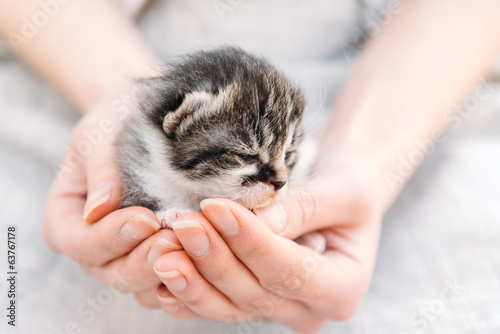 Kitten in human hands