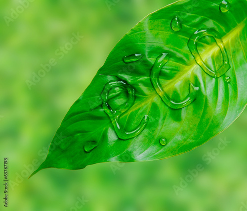 Green leaf with word eco