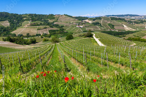 Green hills and vineyards in Piedmont, Italy.