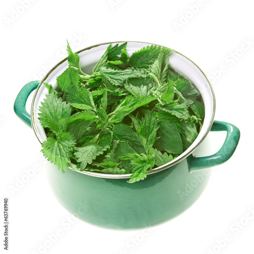 Stinging nettle in pot