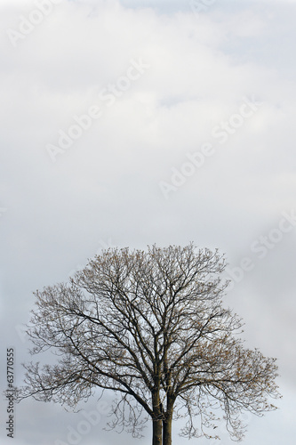 Lonely tree and the open sky
