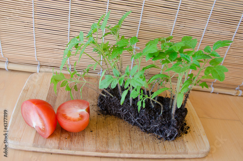 sprout growing and tomato in half, concept harvest