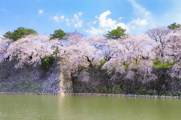 名古屋城の堀