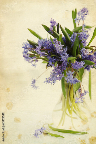 flower scilla in vase, vintage