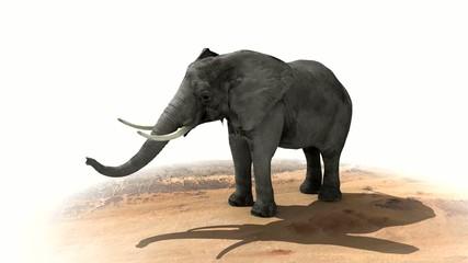 elephant01