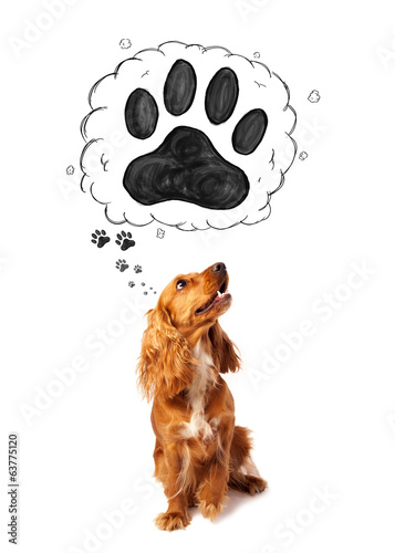 Cute cocker spaniel with paw above her head