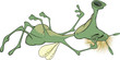 Sleeping green insect. Cartoon