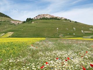 Castelluccio di Norcia. Cultivation of lentils