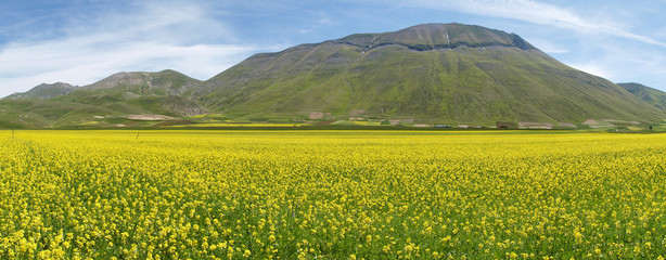 Castelluccio di Norcia. Cultivation of lentils
