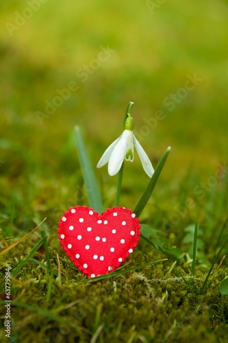 Snowdrop with heart