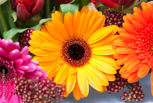 Gerbera Daisies - pink, yellow and orange