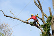 élaguer un arbre - 63784176