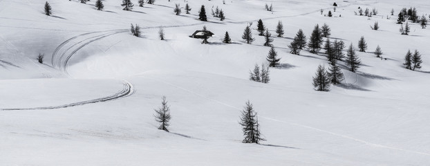 Pralongià, snow and trees - Dolomites, Italy