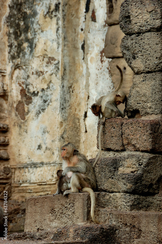 Monkey Temple - Lopburi
