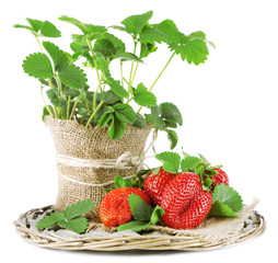 Strawberries with leaves on wicker mat, isolated on white
