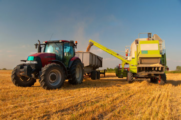 Modern combine harvester unloading grain into the trucks