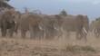 elephants in a dusty dry park