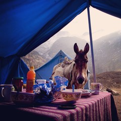 Himalayan Breakfast