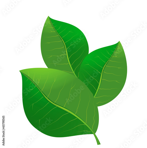 three green leafs