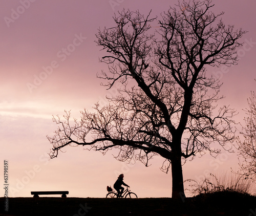 Bench Tree and Bicycle Silhouette